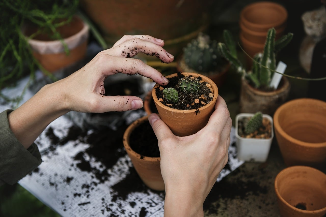 Top 25 des utilisations du marc de caf smart planete - Marc de cafe engrais pour quelles plantes ...