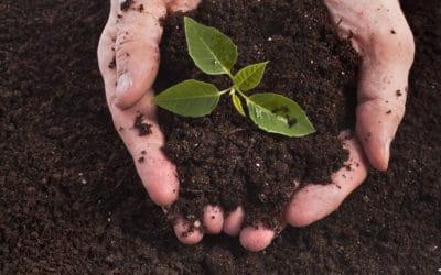 Bac à compost : Quel composteur choisir ?