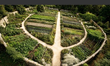 La permaculture : Définition et application