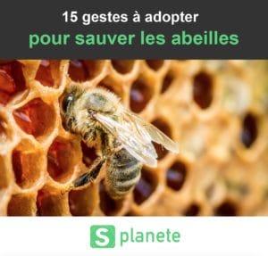 15 gestes pour sauver les abeilles