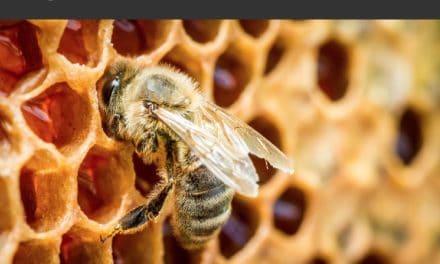 15 gestes à adopter pour sauver les abeilles