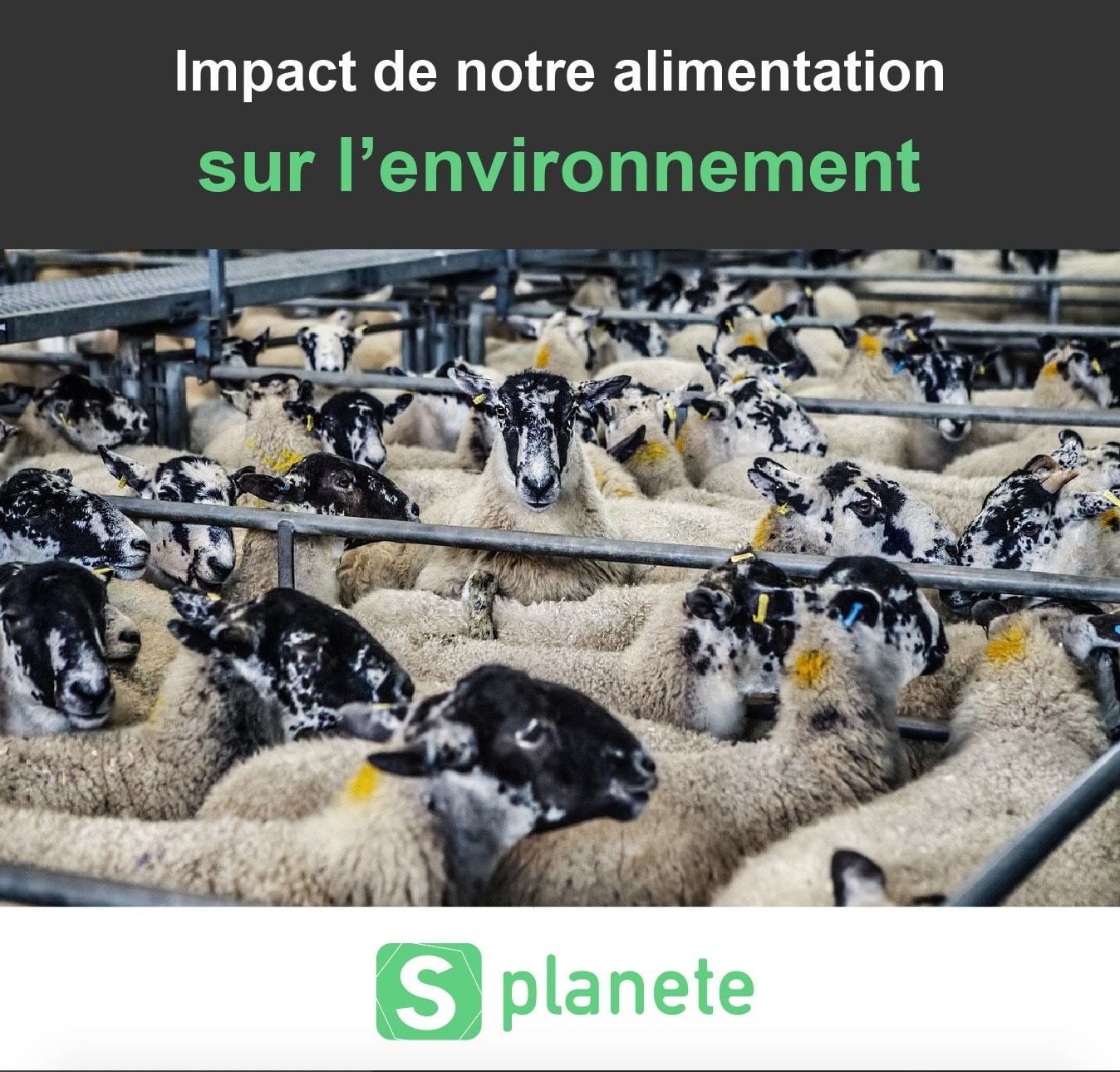 l'impact de l'alimentation sur l'environnement