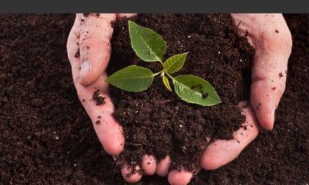 Bac à compost : Les 7 meilleurs composteurs de jardin en 2018