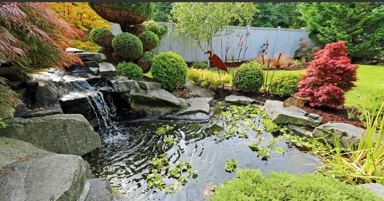 Bassin de jardin : Construire, aménager et entretenir (préformé et bâche PVC)