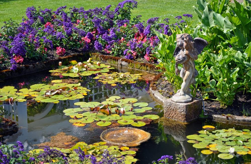 Les plantes aquatiques pour bassin