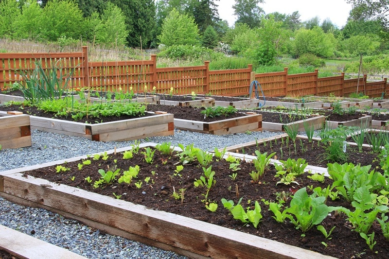 aménagement du potager en permaculture
