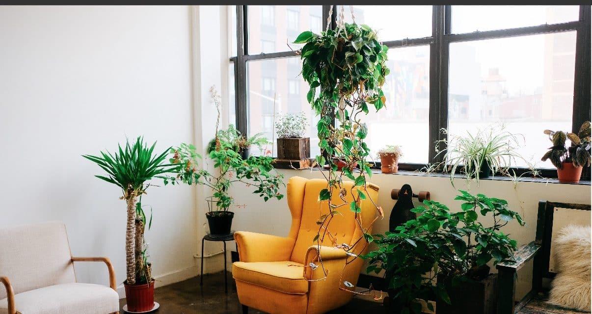 45 Plantes dépolluantes (intérieur & extérieur)