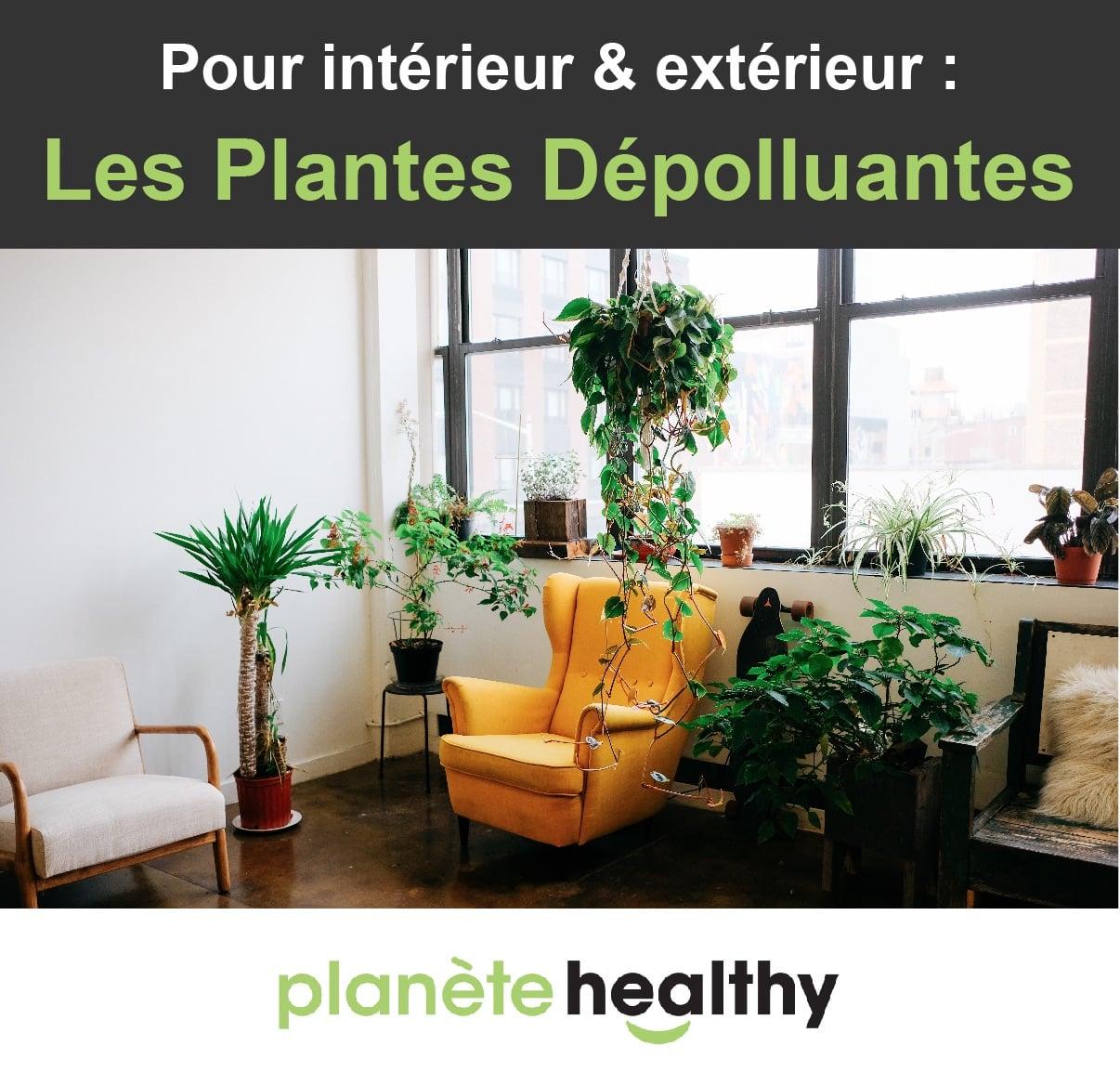 Plante Exterieur Qui Aime L Eau 45 plantes dépolluantes (intérieur & extérieur)